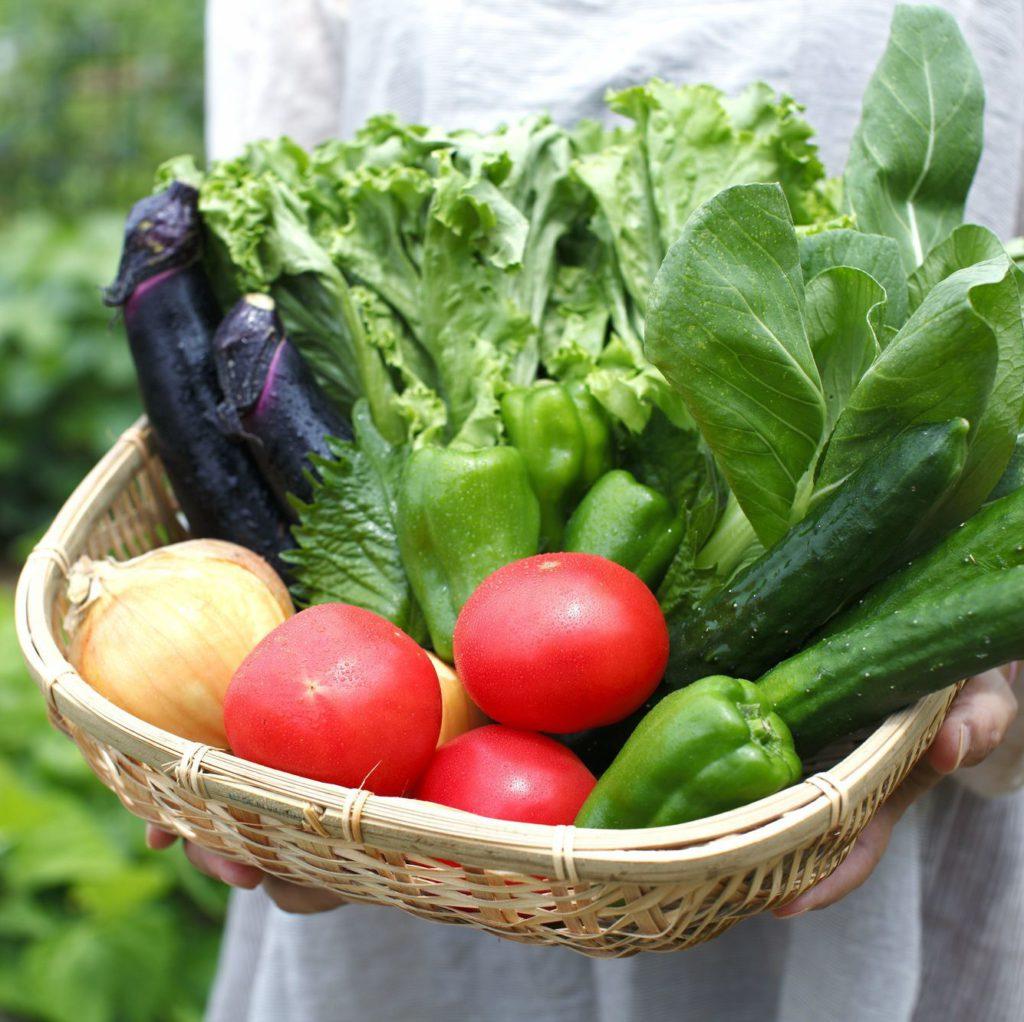 フルーツトマト付栽培期間中農薬不使用野菜セット(2人用)